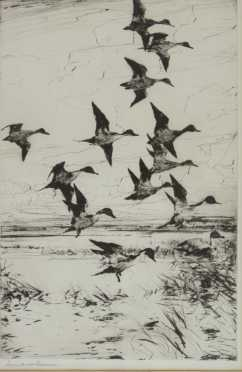 "Frank Weston Benson Dry point titled ""Pintails Passing,"""