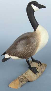 Warfield Canada Goose