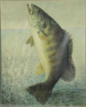 Crayon lithograph of a Fresh Water Bass