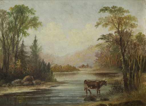 Primitive Landscape of a bull walking in a river