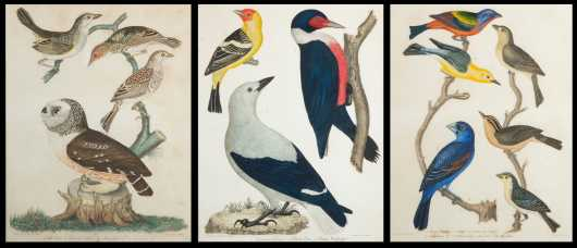 A.Wilson Framed Bird Prints