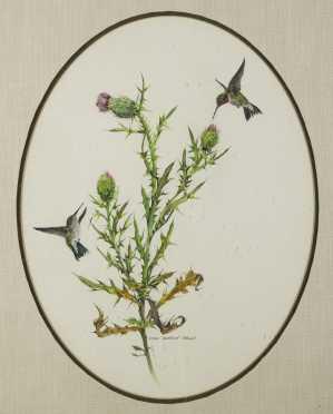 "Mary Barrett Brown, (1938-   ) American., Watercolor of ""Hummingbirds & Thistle"""