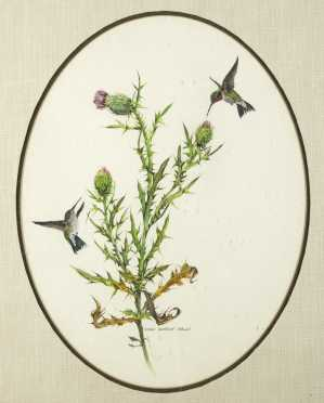 """Mary Barrett Brown, (1938- ), American, watercolor of """"Hummingbirds and Thistle"""""""