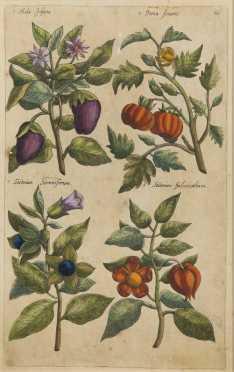 Sweert, Emanuel (1552-1612)