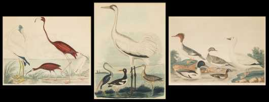 Three Hand Colored Prints of Waterfowl