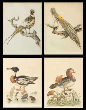 Two Pair of Bird Prints