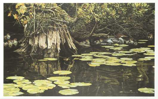 "Robert Bateman Print, ""Merganzer Family in Hiding"""