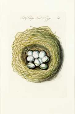 Hand Colored Engraving--Eggs in Nest