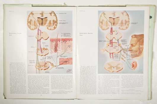 CIBA Collection--Medical Illustrations - Netter