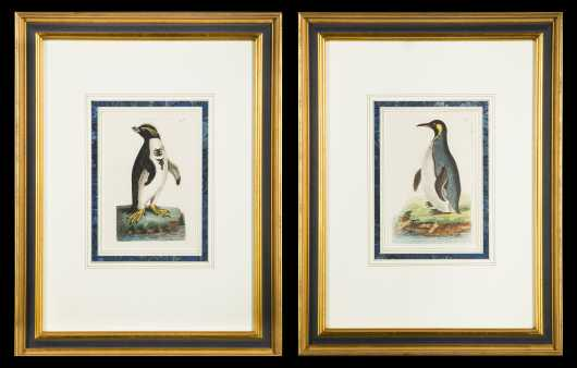 Two Hand Colored Copperplate Engravings of Penguins from Shaw & Nodder's