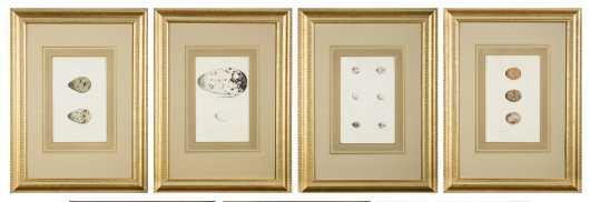 Hewitson's British Birds' Eggs