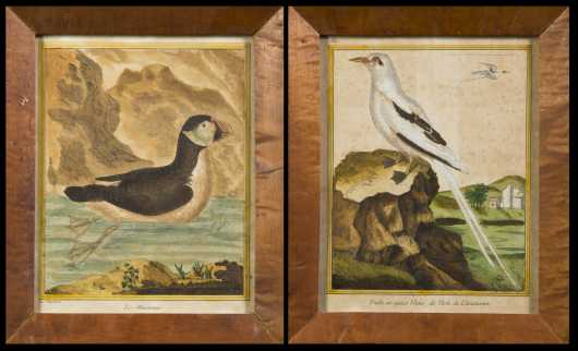 Pair of French Colored Prints of Birds by Martinet