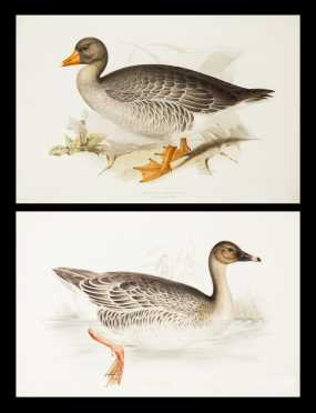 "Two ""Gould"" Goose Prints by Edward Lear"