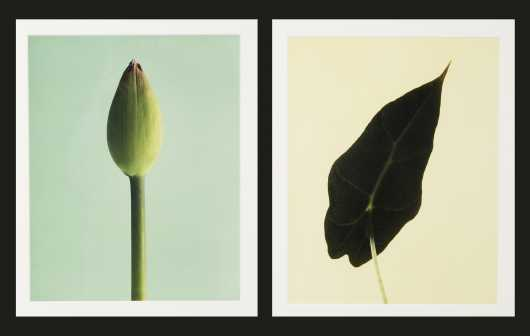 Pair of Photographs of Flowers
