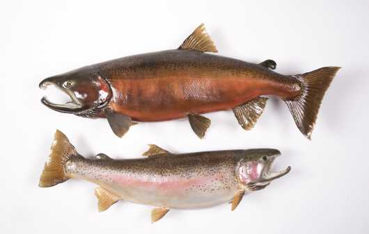 Two Freshwater Fish Mirents