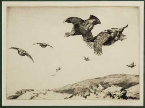 Winfred Marie Louise Austen, England (1876-1964) Etching of Grouse in Flight