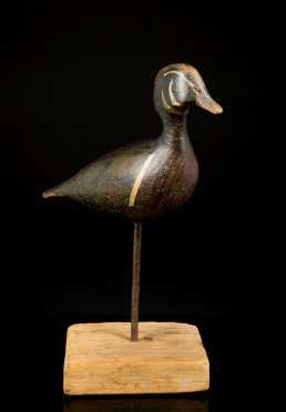 Very Old Looking Standing Wood Duck Drake