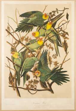 """After John J. Audubon, Julius Bien Edition, """"Carolina Parrot"""" *AVAILABLE FOR $10,000.00*"""