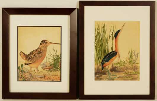 Two Hand Colored Prints of Birds