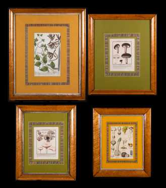 Four Botanical Prints