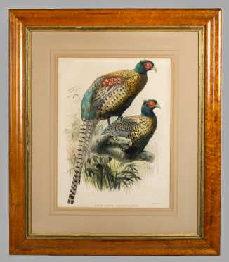 """Phasianus Decollatus""- J. Wolf & Smith Lithographer"