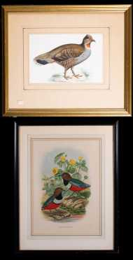 Two 19thC Colored Bird Prints