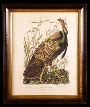 "After J.J. Audubon ""Great American Cock Male"" 1937 Edition"
