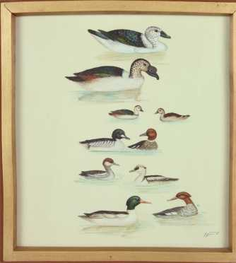 """Nepalese Water Painting, plate for the book, """"Birds of Nepal"""""""