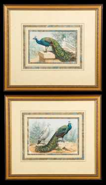 19thC French Pair of Colored Peacock Prints
