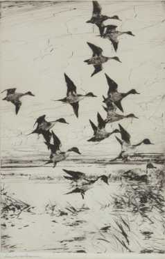 """Frank Weston Benson Dry point titled """"Pintails Passing"""""""